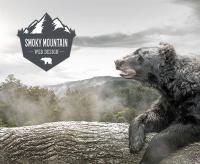 Smoky Mountain Web Design